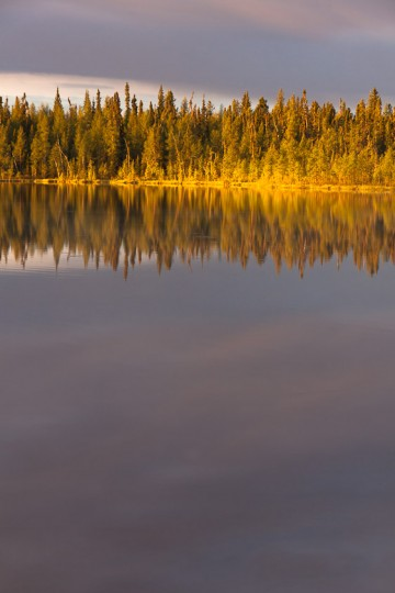 The first golden yellow rays of sunrise light up the far shore of a small boreal lake closely surrounded by dense spruce forest