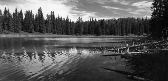 Reflections of clouds, a dark shoreline and ripples in the water combine to create a full range of tones on the surface of a small boreal lake