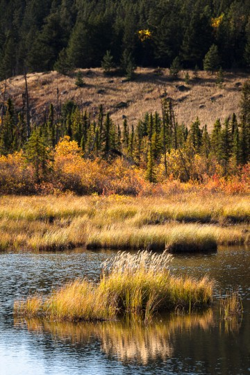A warm late autumn breeze rustles the dried grass around a small mountain lake in Jasper National Park, Canada