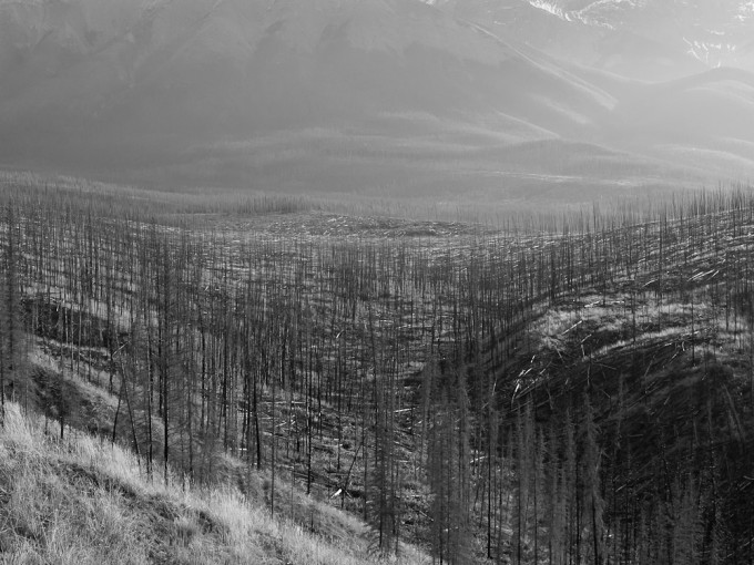 Fire-blackened spruce tree stems stand in a valley laid bare by forest fire in 2003 in Jasper National Park