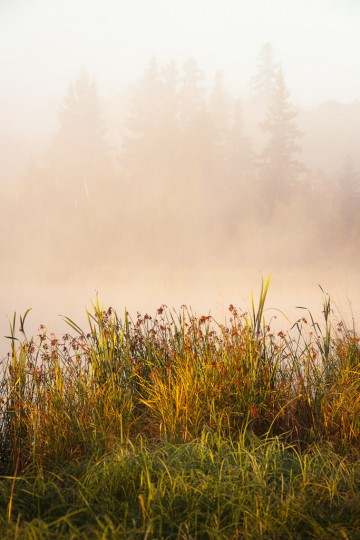 Warm light from the rising sun glows on mist above a small lake at the Ministik Lake Sanctuary in Alberta, Canada.