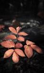 Autumn foliage triptych III