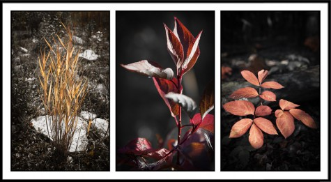 Autumn foliage triptych