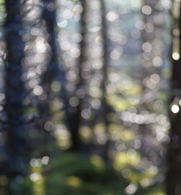 Deliberately out of focus, a mosaic of light is created by light glinting through raindrops in a dense boreal forest stand.